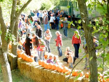 Passengers are busy selecting their pumpkins.
